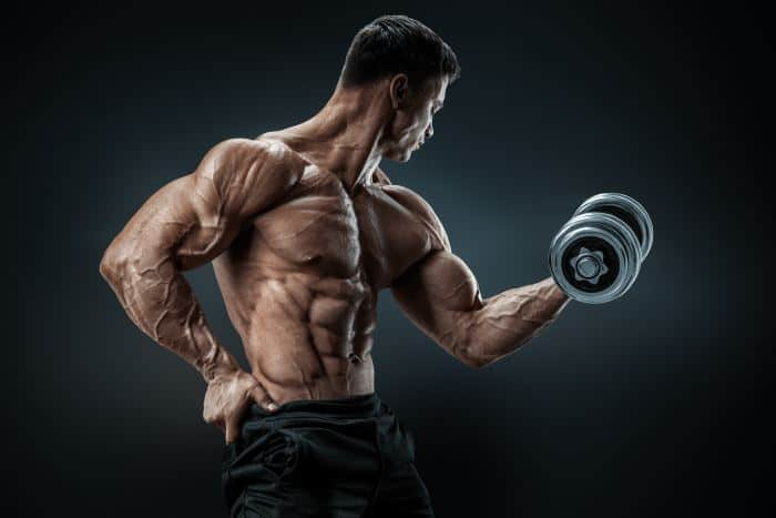 Biceps Anatomy | All About the Biceps Muscles